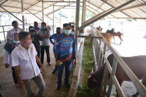Plt Gubernur Aceh Tinjau Peternakan Sapi di Indrapuri